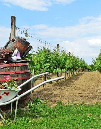 Vinska klet STRUČIĆ