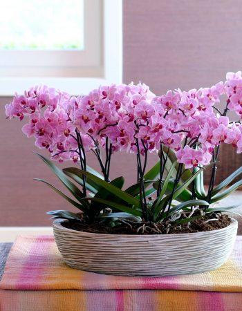 Ocean Orchids d.o.o. – Tropski vrt